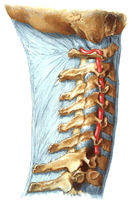 Spinal_Artery